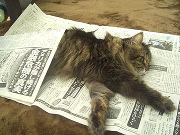 どうしてそんなに新聞が好きなのかな??
