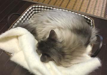 雨の日は猫もよく寝る