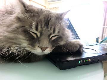 PCを枕にするのが好き