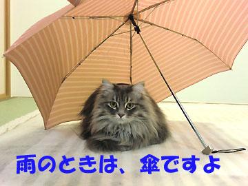 傘を乾かしていると、必ず入り込みます