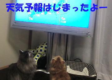 さあ、テレビの前に集合!