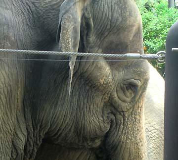 ゾウさんの目はどうして切なく感じるんだろう