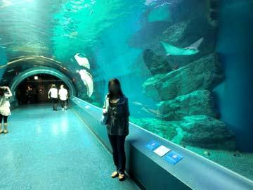 水族館って好きなのよね♪