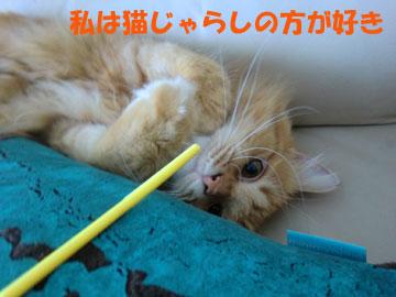 猫じゃらしが一番なのよ^^