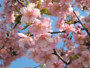 可愛い花びらだね