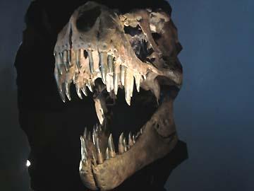 こんな歯に囓られてら大変大変!